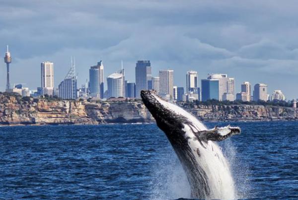 harbourcat_whales_5
